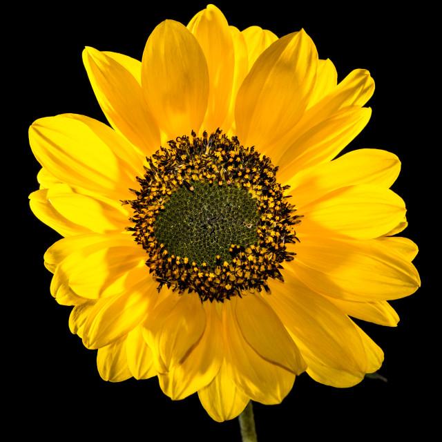 """Yellow Awakening"" stock image"