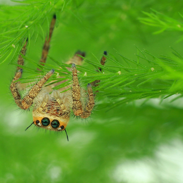 """Little Spider Hanging Upside Down"" stock image"