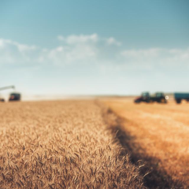 """Defocused Combine harvester agriculture machine harvesting gold"" stock image"
