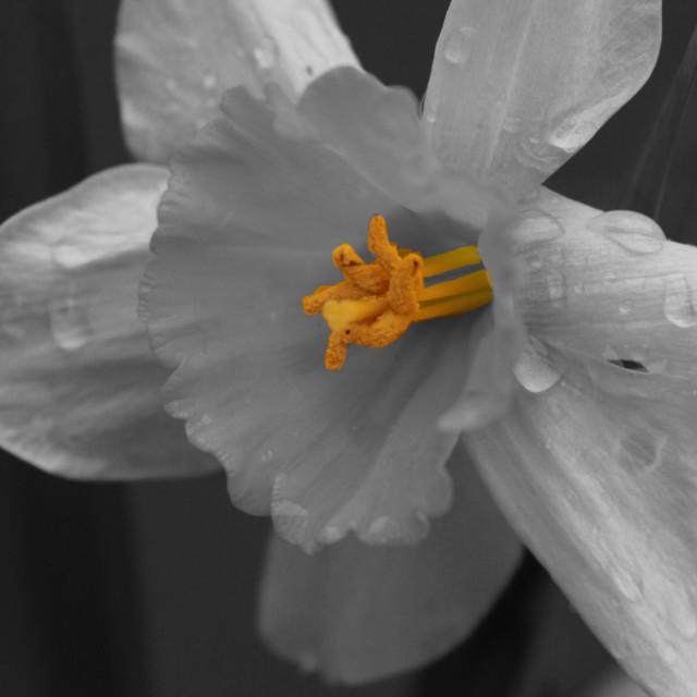 """""""Flor día de lluvia."""" stock image"""