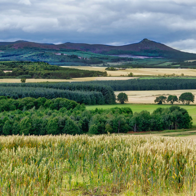 """Bennachie"" stock image"