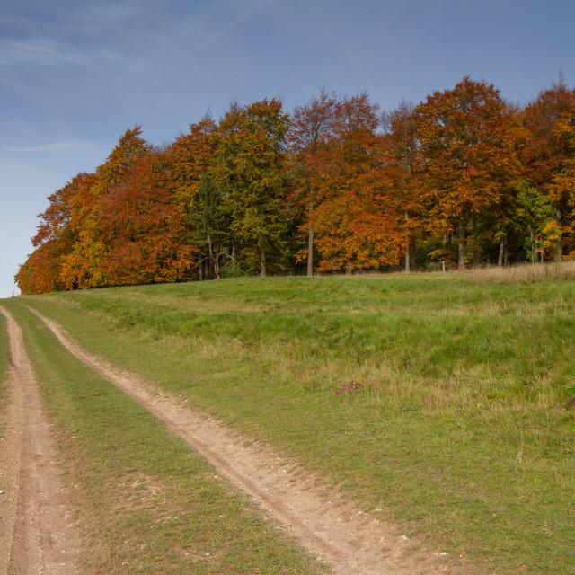 """The Ridgeway"" stock image"