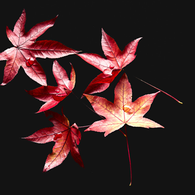 """""""A Scattering of Leaves"""" stock image"""