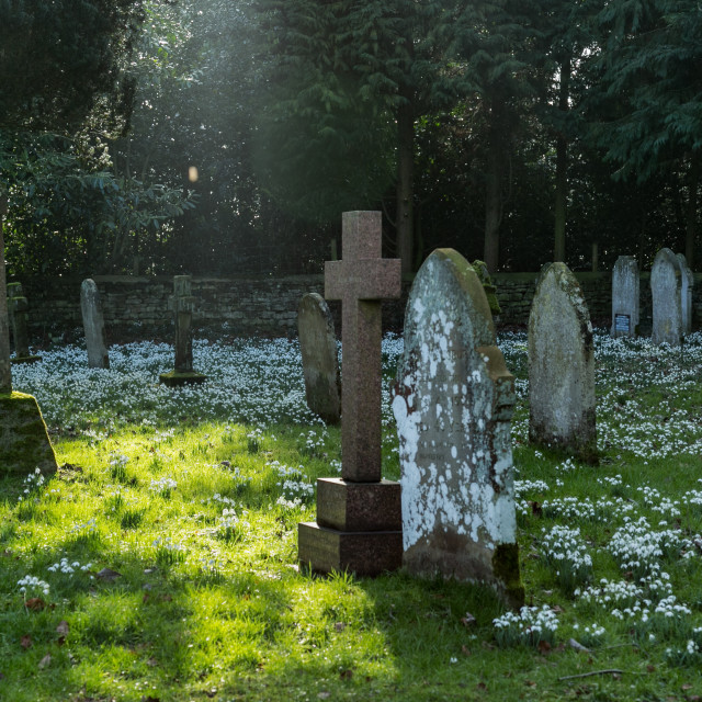 """""""Snowdrops in the church yard"""" stock image"""
