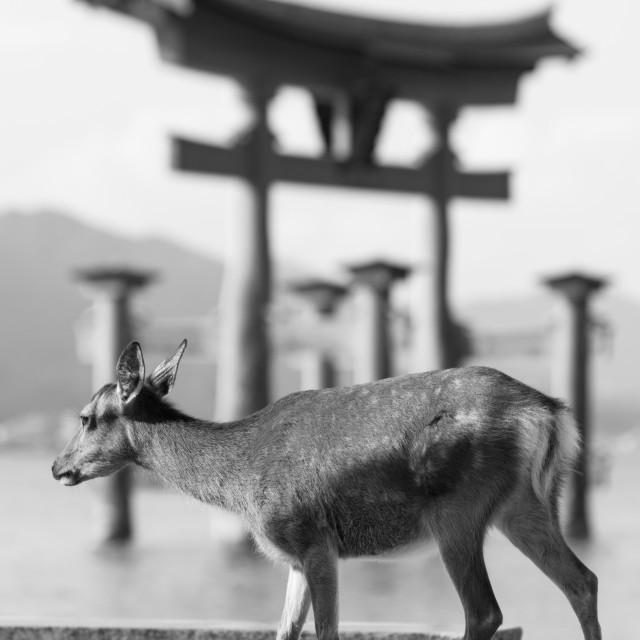 """""""Dear deer"""" stock image"""