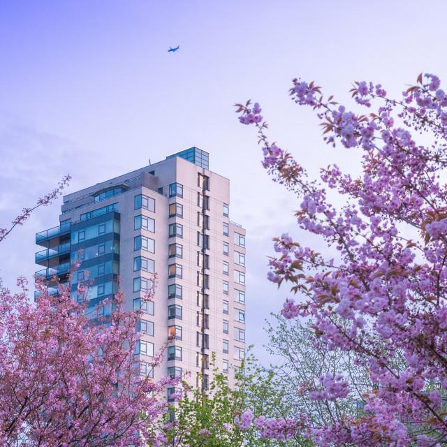 """""""Spring in Amsterdam"""" stock image"""