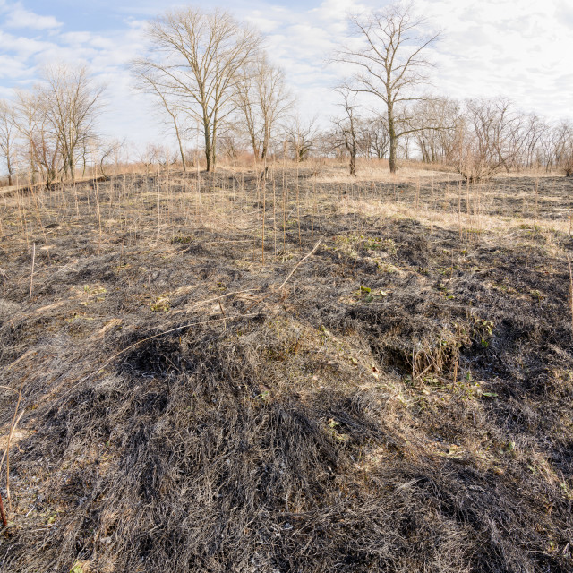 """Burnt Land"" stock image"