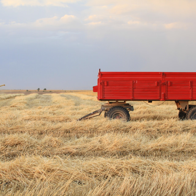 """""""Harvester is working in the field during harvest time"""" stock image"""