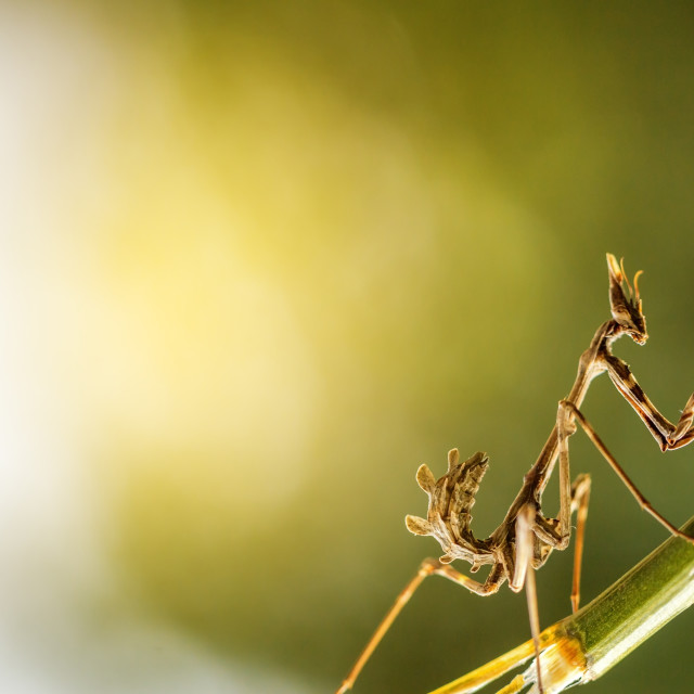 """mantis in beautiful magical background"" stock image"