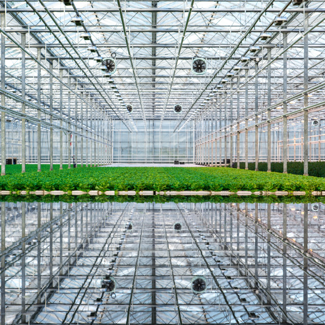 """Greenhouse reflections"" stock image"