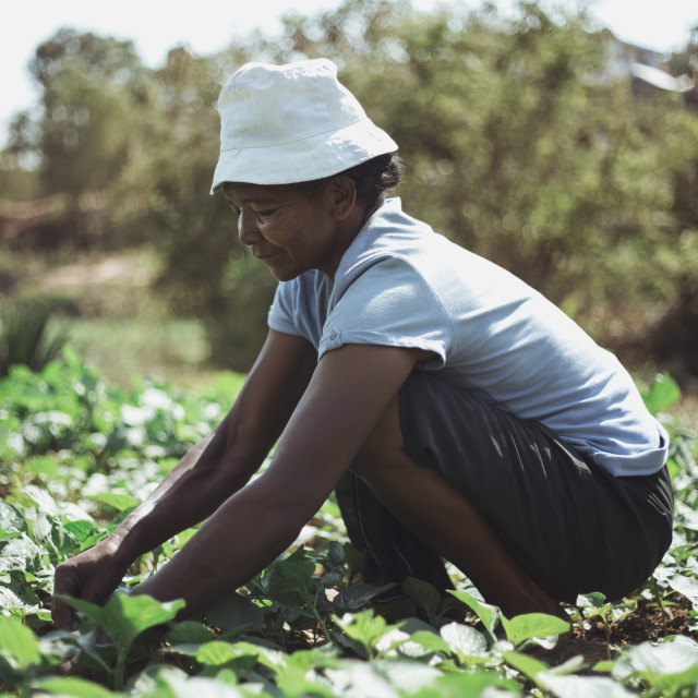 """Inside Madagascar - Farming Woman"" stock image"
