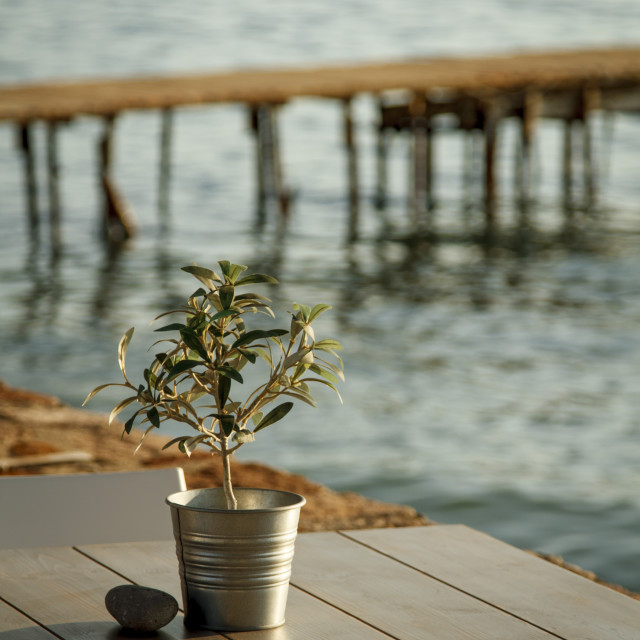 """""""Olive tree on table 1"""" stock image"""