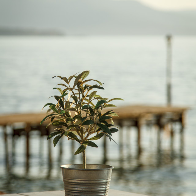 """""""Olive tree on table 2"""" stock image"""