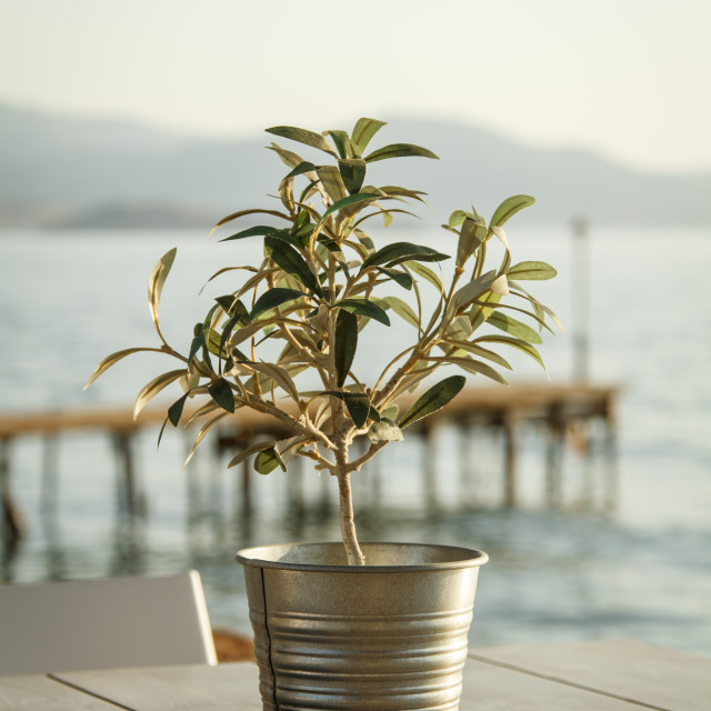 """""""Olive tree on table 3"""" stock image"""