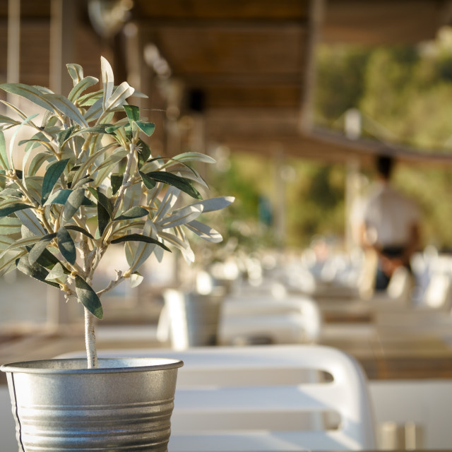 """""""Olive tree on table 4"""" stock image"""