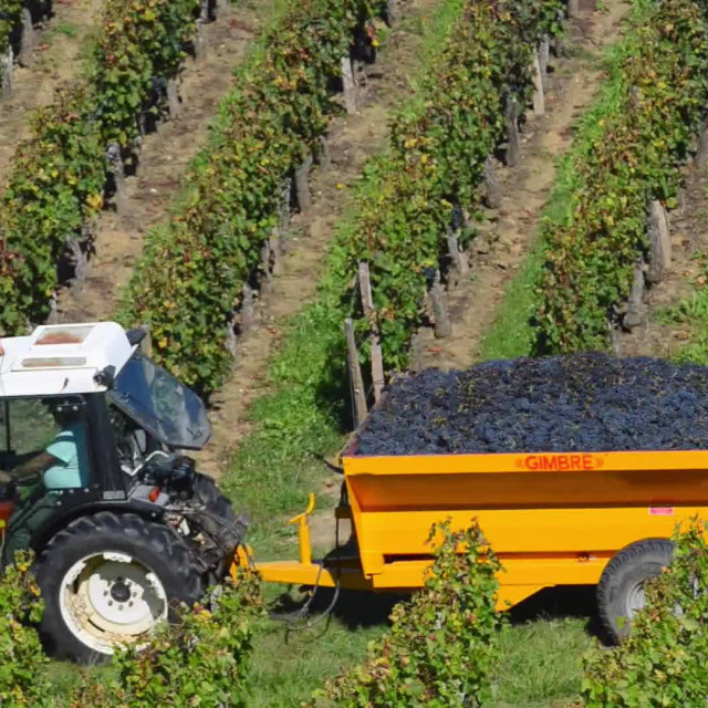 """Truck loaded with freshly picked grapes"" stock image"