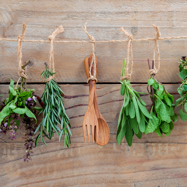 """Various herbs hanging on shabby wooden background. Parsley ,oregano, mint,..."" stock image"