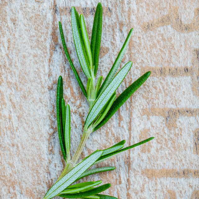 """Closeup branch of fresh rosemary on shabby wooden background for seasoning..."" stock image"