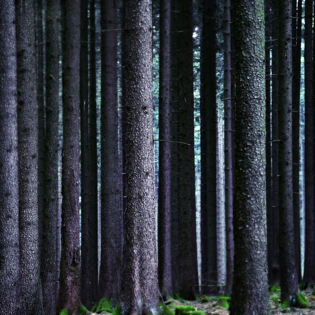 """Forest Lines"" stock image"