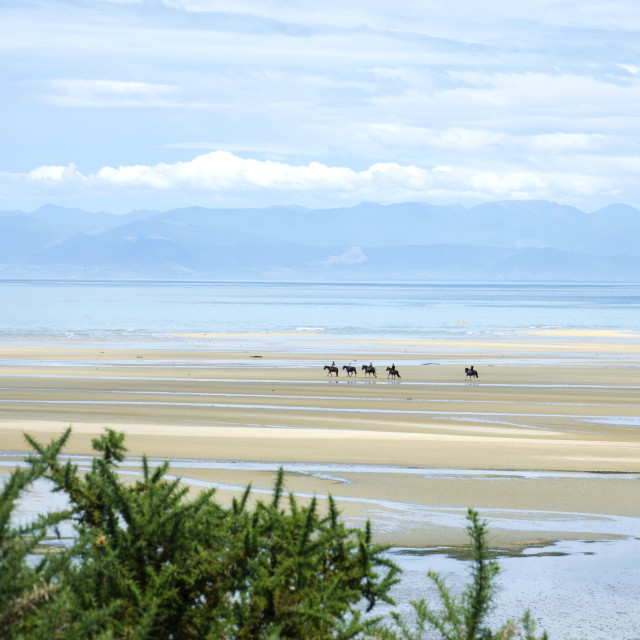 """Abel Tasman Beach Horses"" stock image"