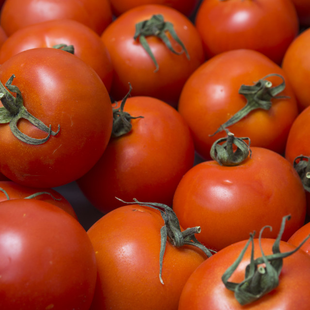 """close up of tomatoes"" stock image"
