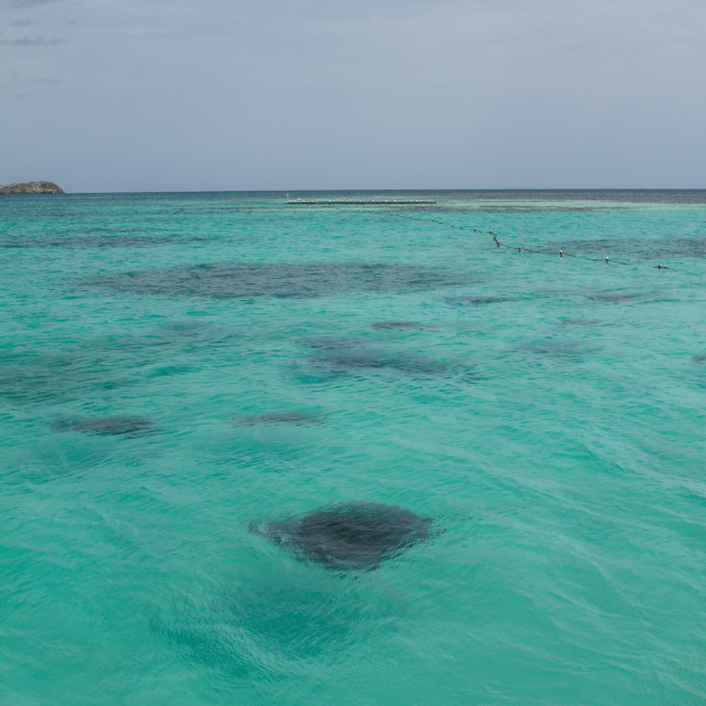 """Stingray City, Antigua"" stock image"