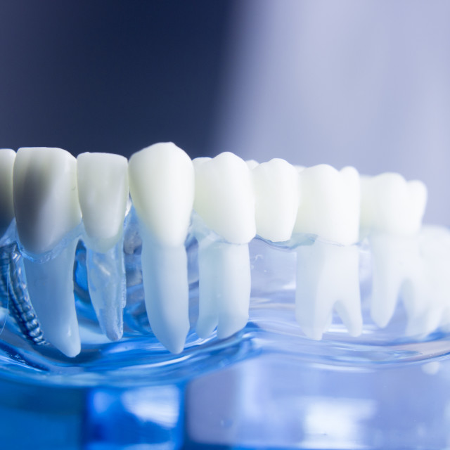 """Dental teeth dentistry model"" stock image"