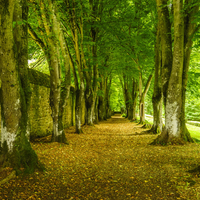 """Avenue at Chateau Rosanbo, France"" stock image"