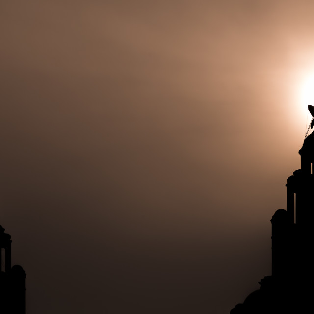 """Silhouette of a Liver bird"" stock image"