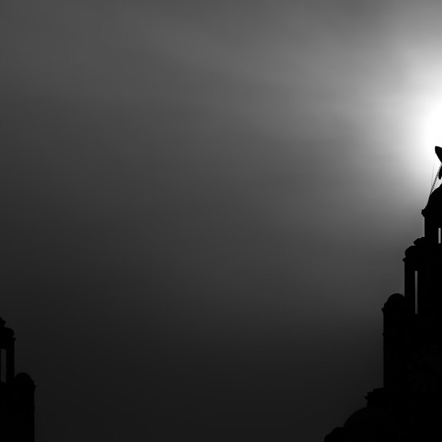 """Silhouette of a Liver bird (monochrome)"" stock image"