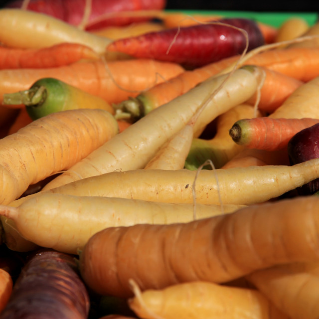 """Colorful carrots"" stock image"