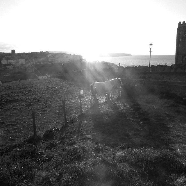 """Horses over Whitby"" stock image"