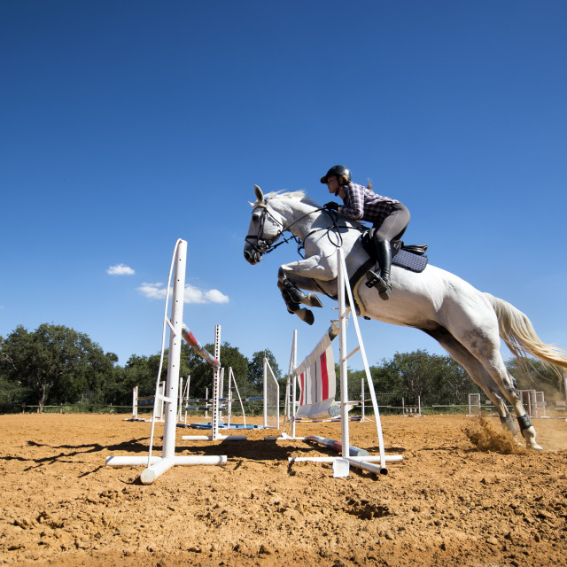 """Horse show jumping"" stock image"