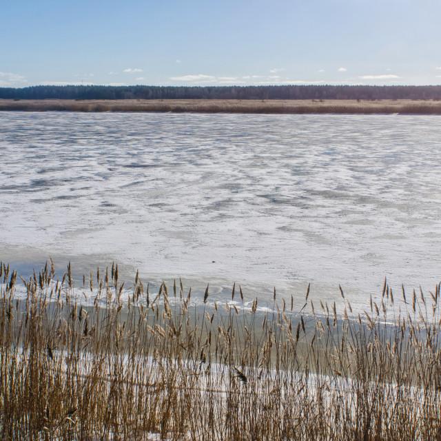 """Frozen Lielupe In Latvia"" stock image"