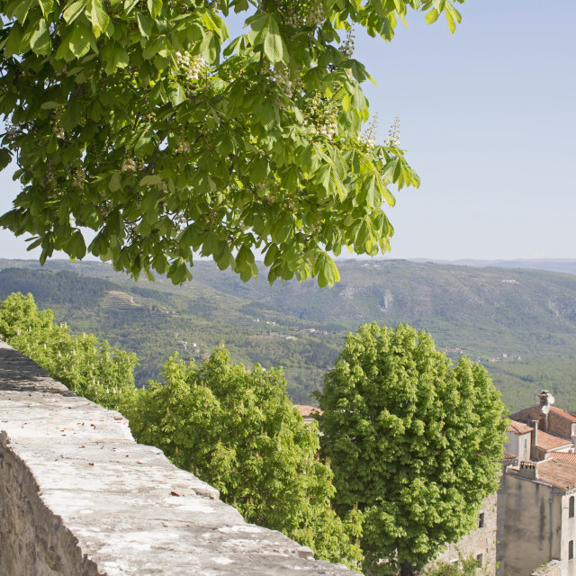 """In Motovun"" stock image"