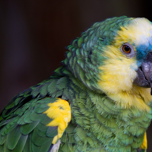 """Parrot"" stock image"