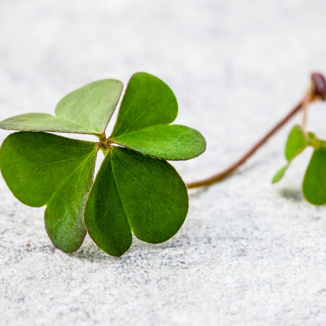 """Clovers leaves on Stone .The symbolic of Four Leaf Clover the first is for..."" stock image"