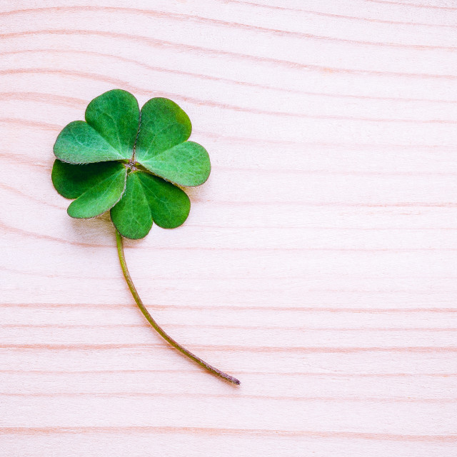 """Clover leaves on shabby wooden background. The symbolic of Four Leaf Clover..."" stock image"