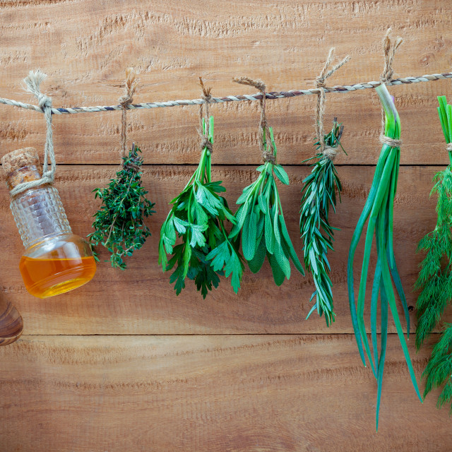 """Various herbs hanging on shabby wooden background. Parsley ,sage,rosemary,..."" stock image"