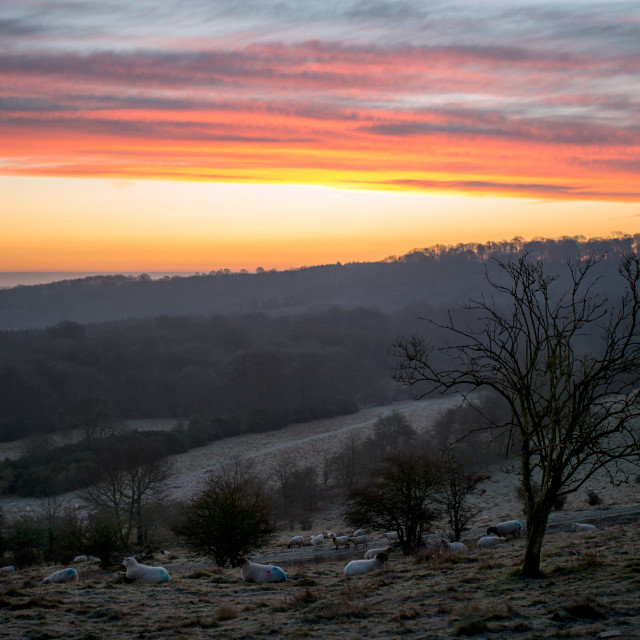 """Sunrise at Ivinghoe Beacon"" stock image"