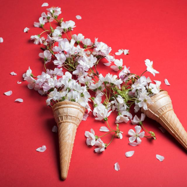 """blossom in cornets"" stock image"