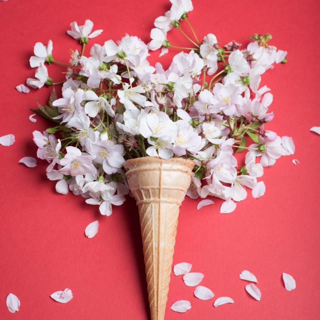 """blossom in cornet"" stock image"