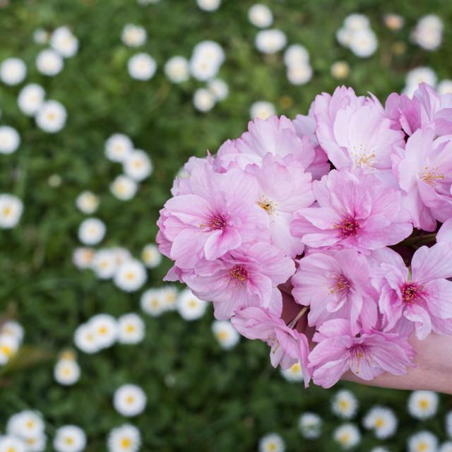 """flowers in hands"" stock image"