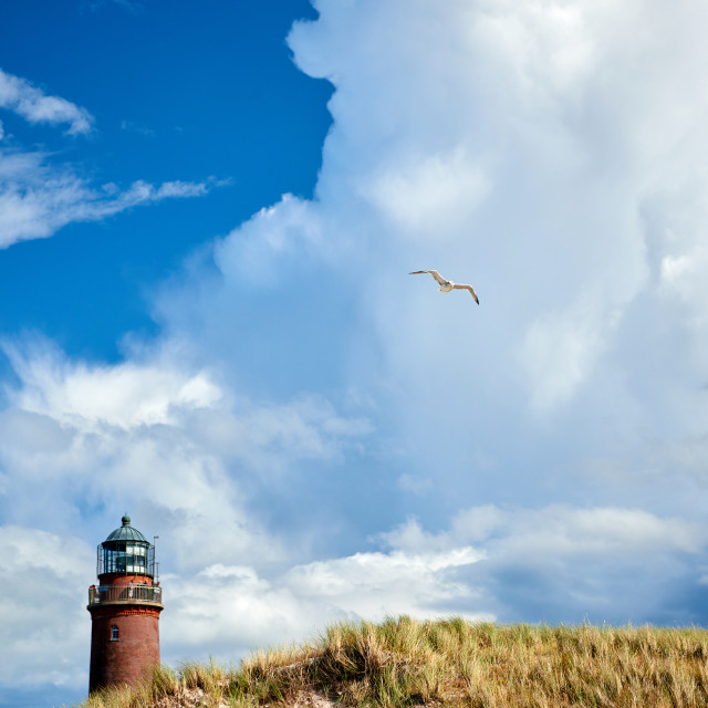 """lighthouse seagull copyspace"" stock image"