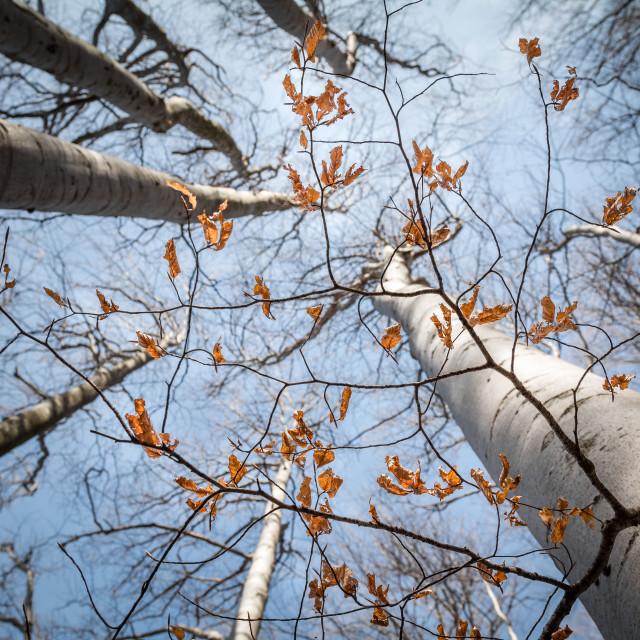 """Canopy Trees"" stock image"