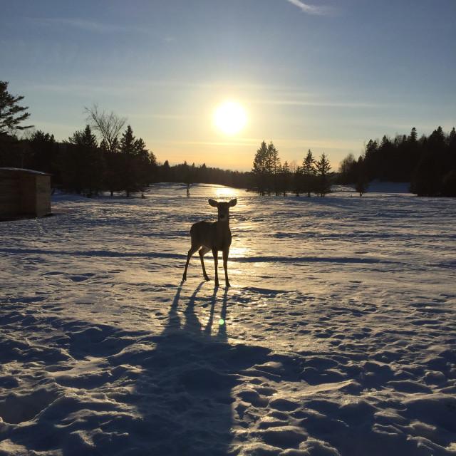 """""""Deeeeer deer"""" stock image"""