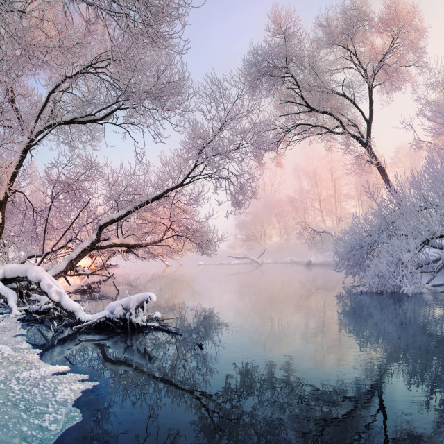 """""""Christmas lace. A small river and frosted trees, lit by the morning sun"""" stock image"""