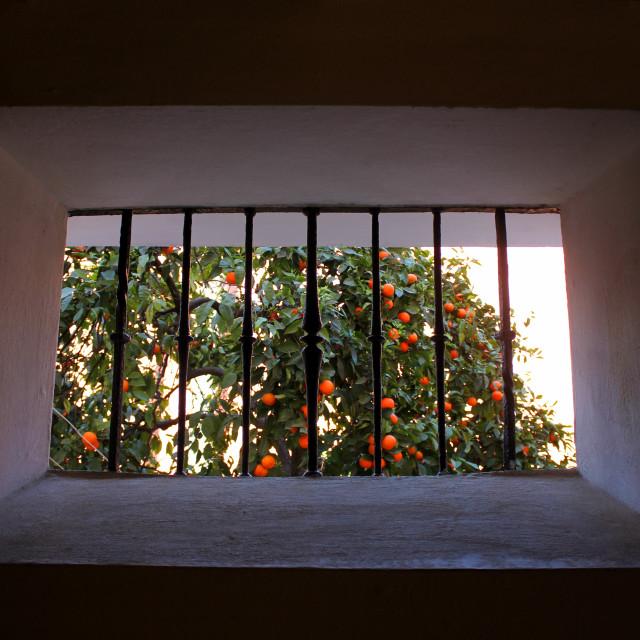 """Window View"" stock image"