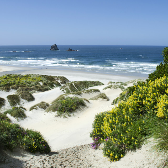 """Sandfly Bay"" stock image"