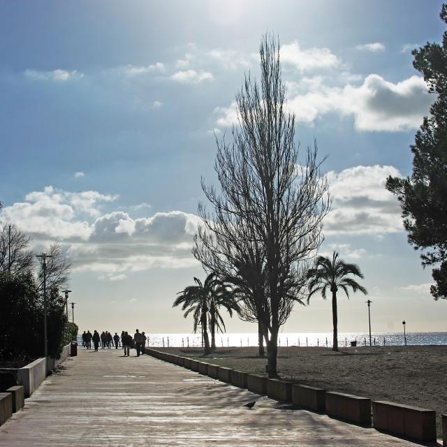 """Mallorca spring backlight"" stock image"